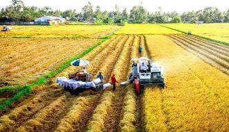 Cái nhìn ảm đạm về xuất khẩu gạo của Thái Lan trong 2021