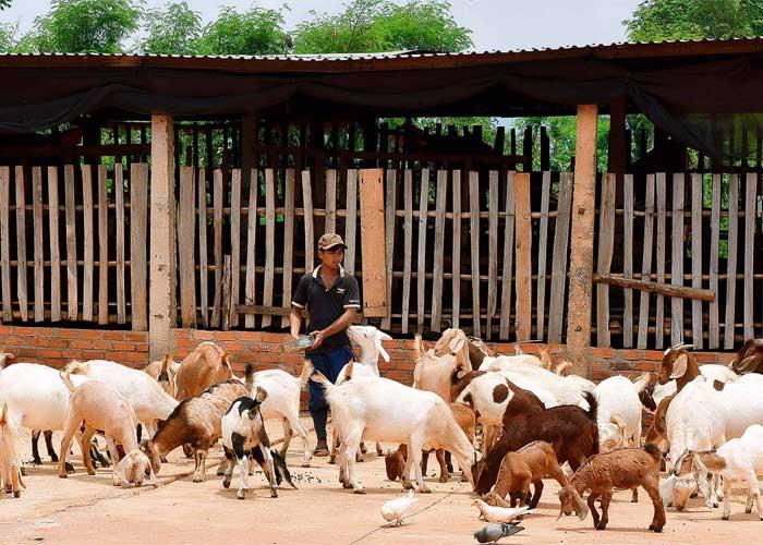 Đẩy mạnh phòng chống dịch bệnh cho gia súc gia cầm hiệu quả