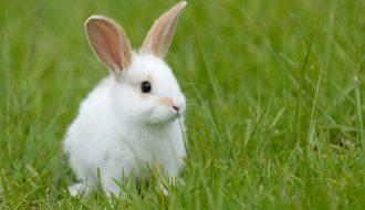 Khám phá ngay cách chăm sóc thỏ trong mùa nắng