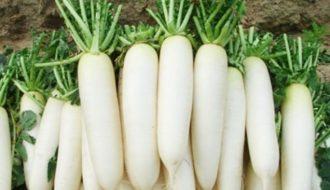 Kỹ thuật gieo trồng củ cải đúng thời vụ cho năng suất cao
