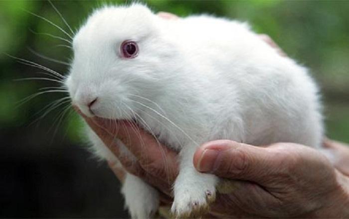 Nhận biết và cách phòng, trị bệnh đường hô hấp trên thỏ