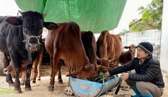 Những biện pháp phòng chống rét cho đàn vật nuôi