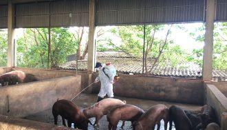 Phòng chống dịch bệnh cùng với một số giải pháp vệ sinh khử trùng