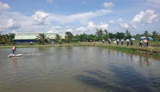 Phương pháp chăm sóc hiệu quả thủy sản trong mùa nắng nóng kéo dài