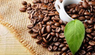 Tập trung nâng cao chất lượng cà phê Việt - cà phê Robusta